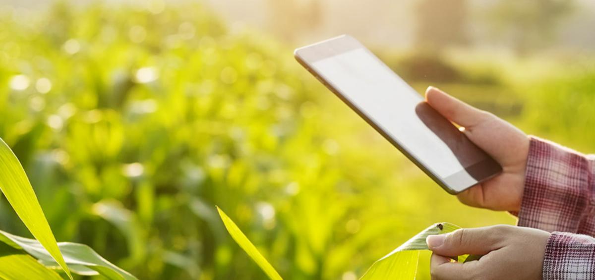 geolink-smart-agriculture